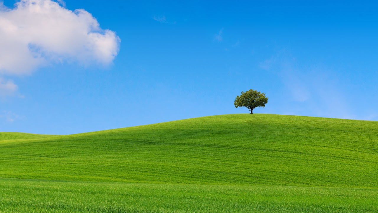 Picture of one Tree on a hill of green grass. Blue sky with white puffy clouds.
